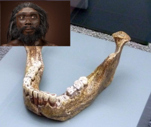 heidelbergensis